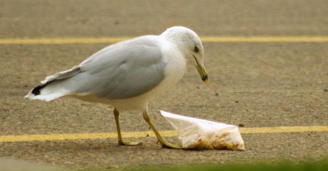 Funny Gull, une photo de Kurt Bauschardt (cc by-sa 2.0)