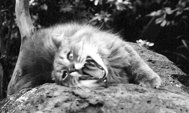 abe psycho, une image de pheonad (cc by-nc-nd 2.0). L'image présente un chat qui a tout l'air d'être fou et enragé.