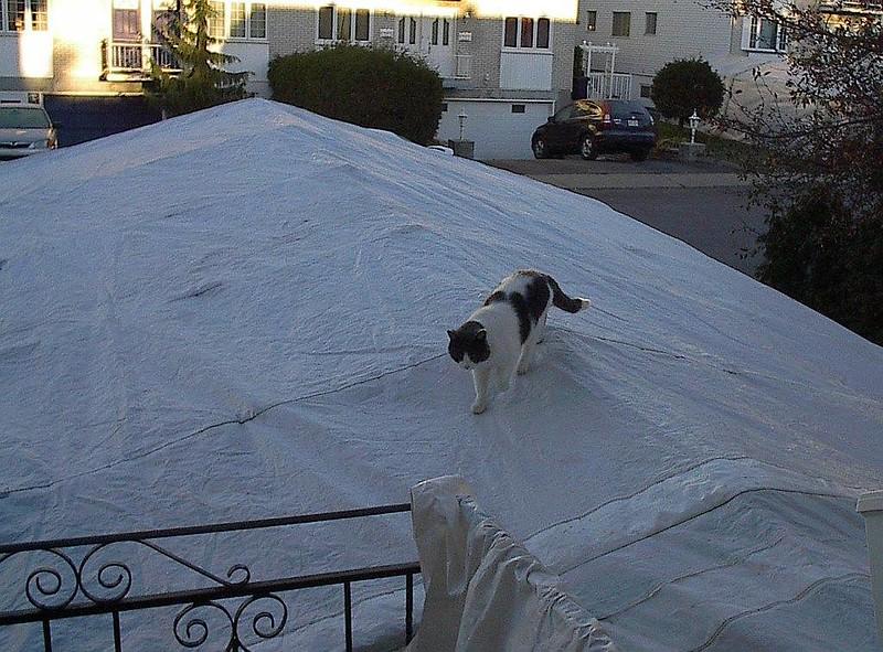 Un chat se promène sur le toit d'un abri tempo.